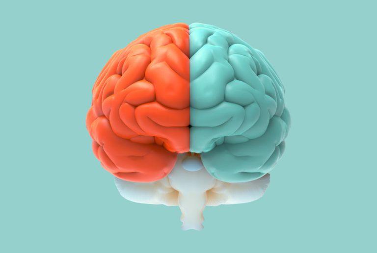 brain split in half