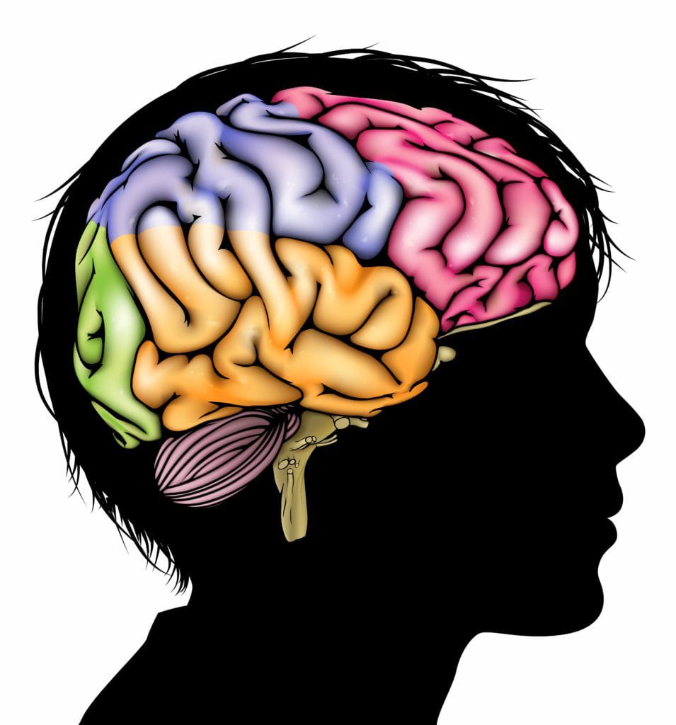 Colorful brain inside a black silhouette of a child's head