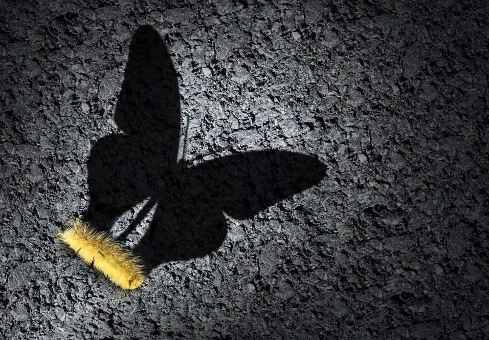 Caterpillar with the shadow of a butterfly