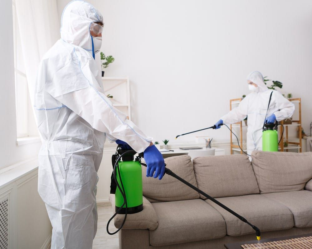 professionals disinfecting an office