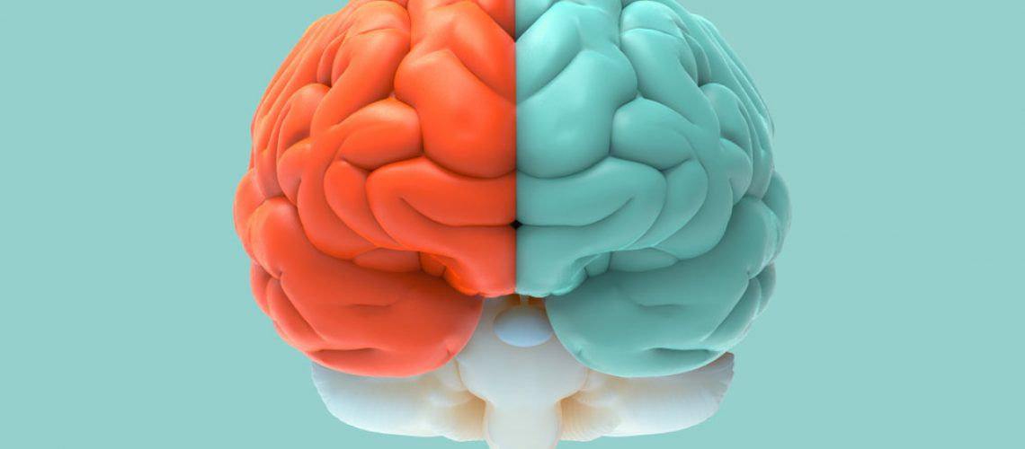 brain split in half
